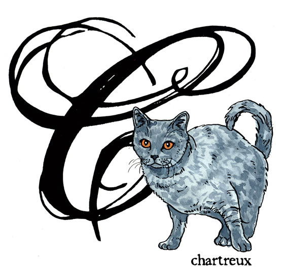 Letters to Meow: Chartreux